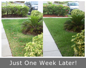 Our team can take your yard from patchy to peachy in under a week